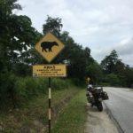Tapir crossing?