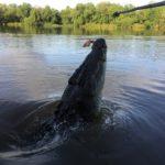 crododile tour near Darwin